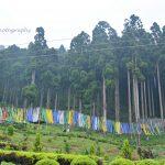 Garden in Darjeeling